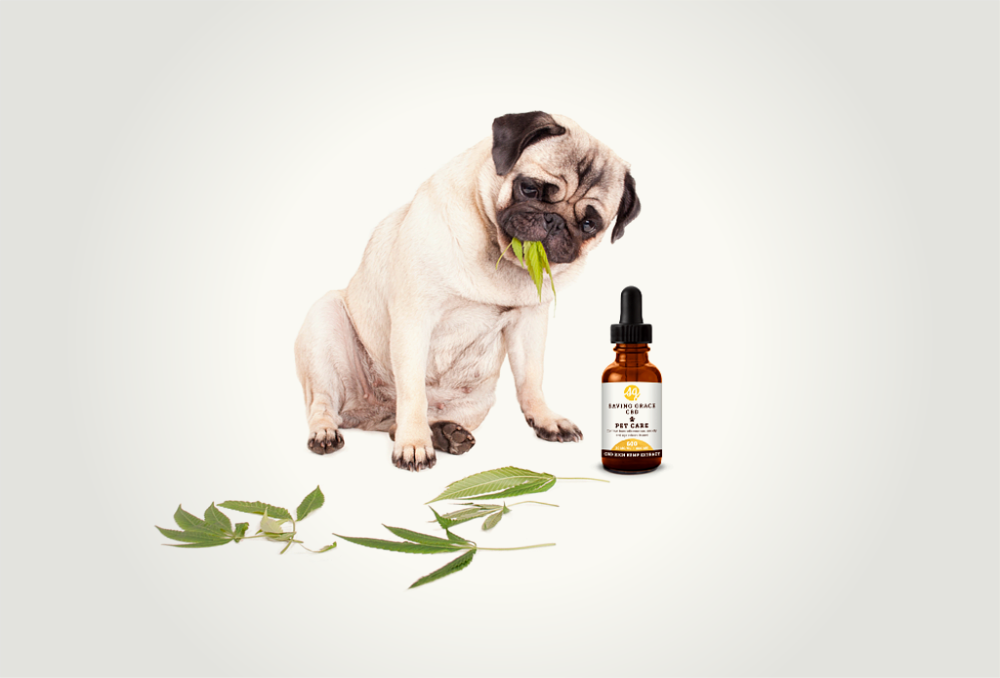 cannabis oil for pets